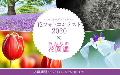 ソニーの花フォトコンテスト 2020